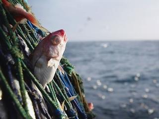 Judge allows fish farming challenge to move