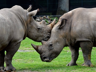 World Rhino Day Tours