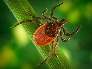 More ticks will lead to more Lyme disease
