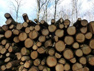 Researchers paid people to stop cutting trees