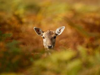 $100K available for UP deer habitat grants