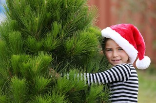 Live Christmas trees can have an impact on your allergies - FOX 47 ...